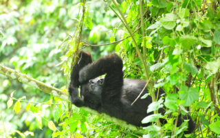 5 Days Uganda Gorilla & Wildlife Safari