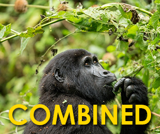 Combined Gorilla Tours