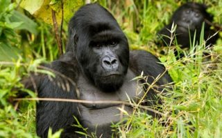 3 Days Rwanda Wildlife Safari