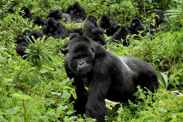 4 Days Gorillas