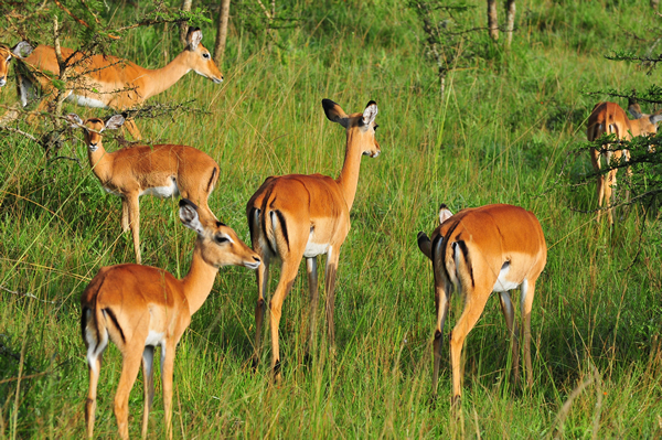 9 Days Uganda Safari