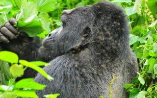 5 Days Rwanda Gorilla