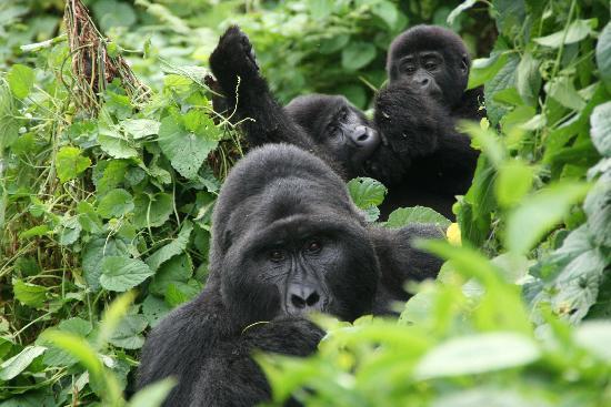 7 Days Rwanda and Uganda
