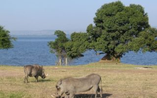 5 Days Lake Mburo and Queen Elizabeth National Park Safari