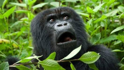 3 Days Rwanda Gorilla Trekking & Dian Fossey Safari