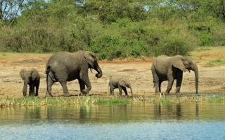 7 Days Uganda Safari Tour