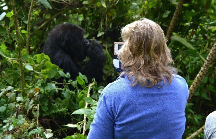 Gorilla-Trek-Congo-and-Chimp-Tracking-Rwanda-700x450