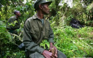 Virunga-rangers-with-gorilla1
