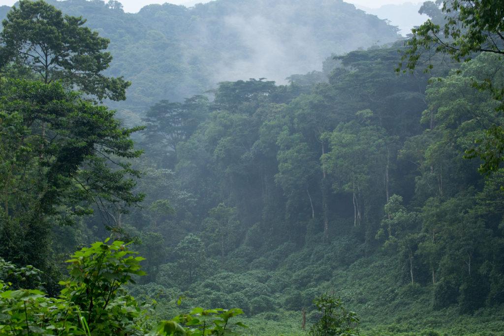 bwindi-forest-uganda-gorilla-safaris