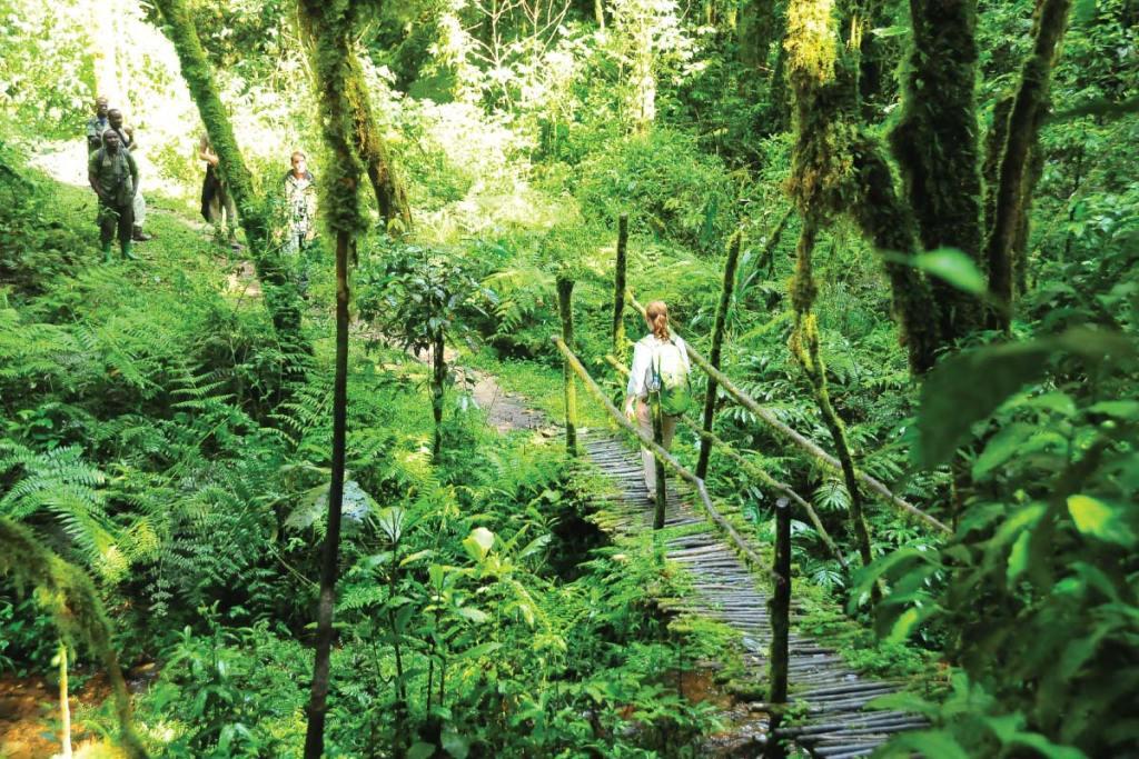 bwindi-trail