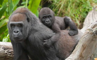 3 Days Virunga