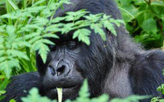 3 Days Bwindi Holiday Safari