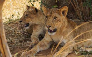 4 Days Murchison Falls Tour