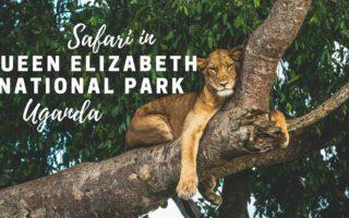 5 Days Bwindi & Queen Elizabeth Tour