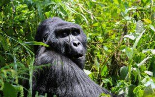 4 Days Affordable Gorilla & Wildlife Safari