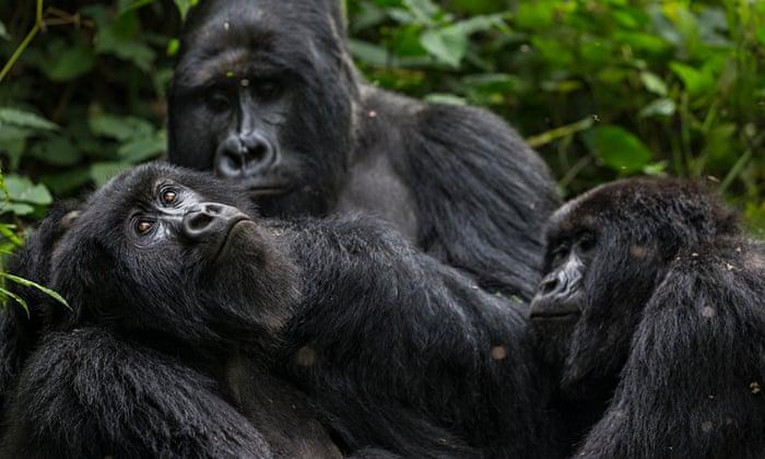 4 Days Uganda Gorilla Trekking & Lake Bunyonyi Tour