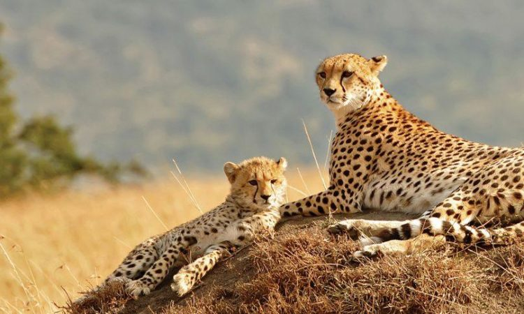 3 Days Kidepo Wildlife tour