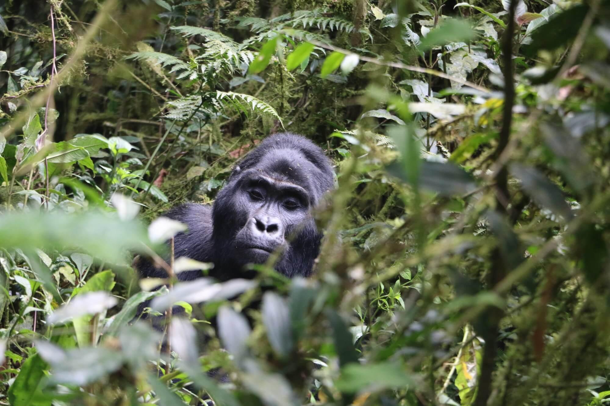 7 Days Uganda Safari Tour