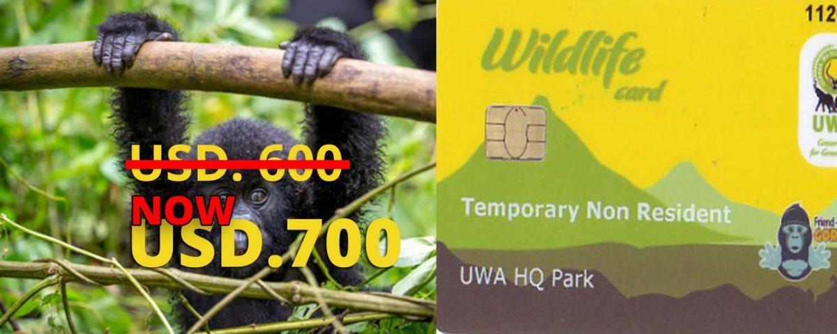 Gorilla Permits in Uganda