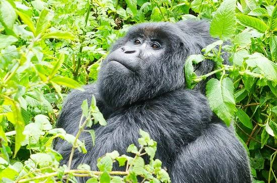 8 Days adventure Uganda Safaris
