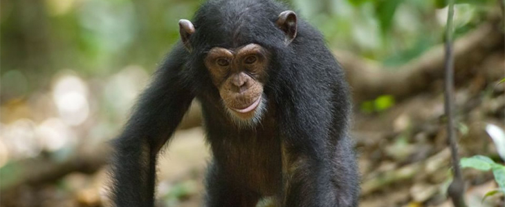 6 Days Ngamba Chimpanzees and Source of the Nile tour