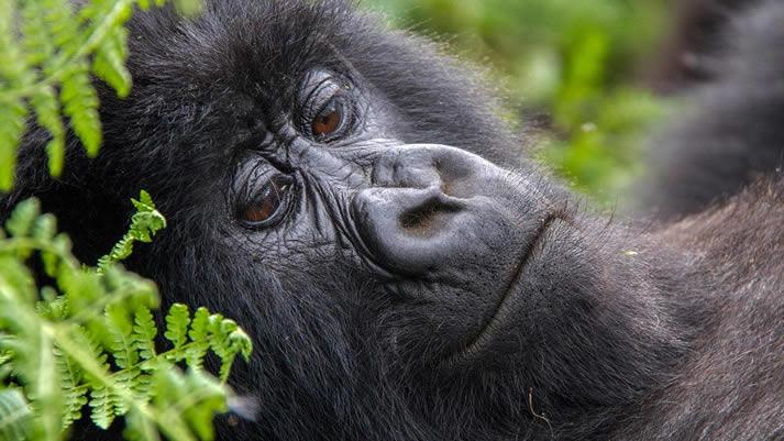 Terms Used in Gorilla Trekking