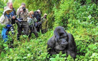 Best Time for Gorilla Trekking in Uganda & Rwanda