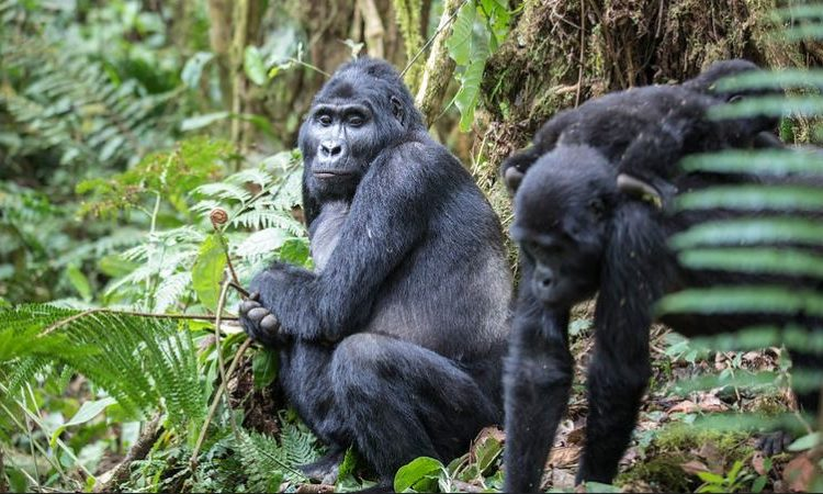 4 Days Gorilla Trekking & Lake Bunyonyi Safari