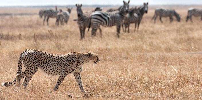 10 Days Eastern Uganda Safari
