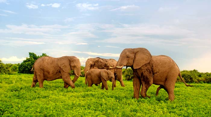 20 Days East Africa Safari