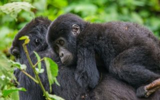 3 Days Rwanda Gorilla and Cultural tour