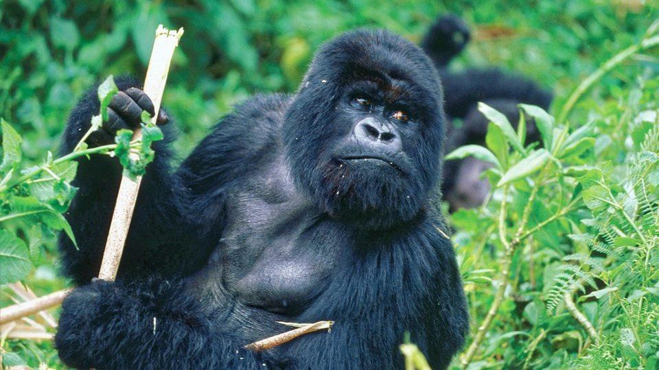 6 Days Jinja & Bwindi Gorilla Trekking Safari
