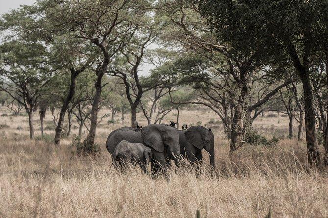 6 Days Kidepo & Murchison Falls Wildlife Safari
