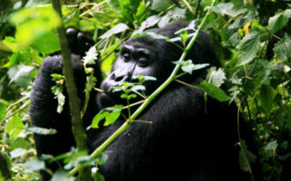 6 days Rwanda and Tanzania Safari