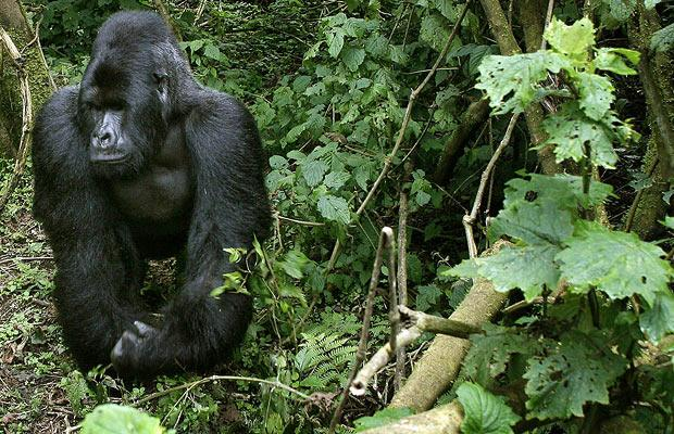 6 Days Best of Congo Safari from Kigali