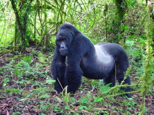 Bwindi National Park Africa