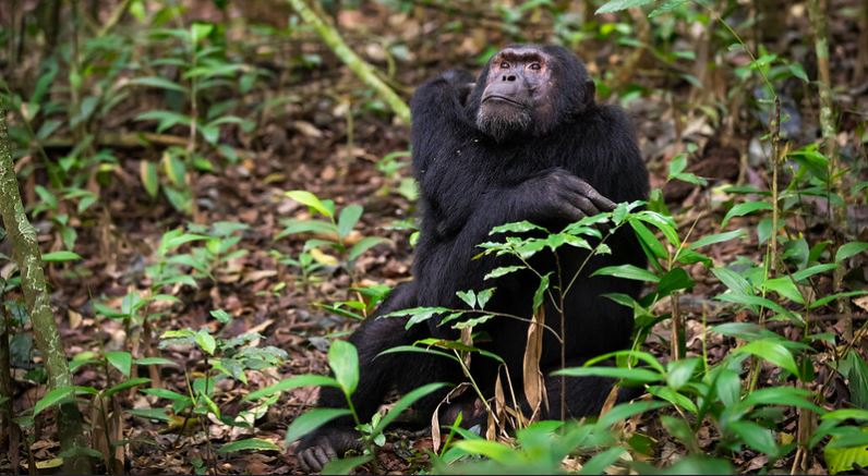 5 Days Bwindi and Kibale Primate Safari