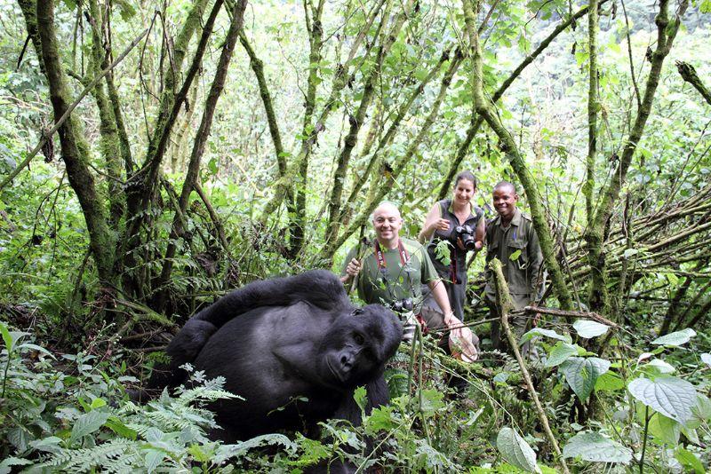 7 Days Mountain Gorilla Safari in Uganda, DRC, and Rwanda