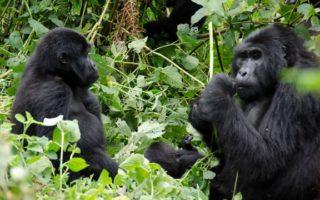 5 Days Volcanoes and Kidepo National Park Safari