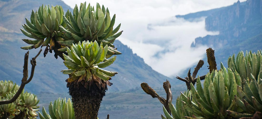 9 days Kidepo National Park and Mt Elgon Safari