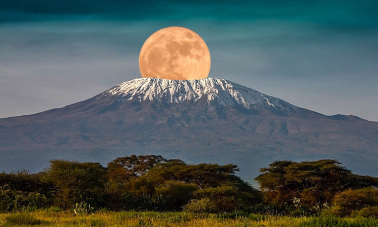 10 days Kilimanjaro and Bwindi National Park safari