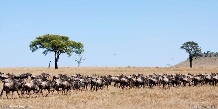 Top 4 National Parks in East Africa