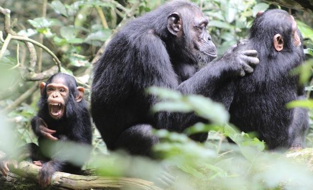 7 Days Uganda Tanzania Wildlife Safari