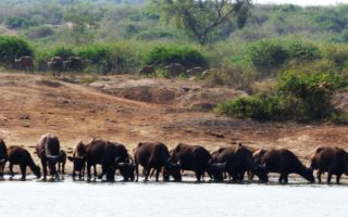 5 days Kidepo & Lake Mburo Wildlife Safari