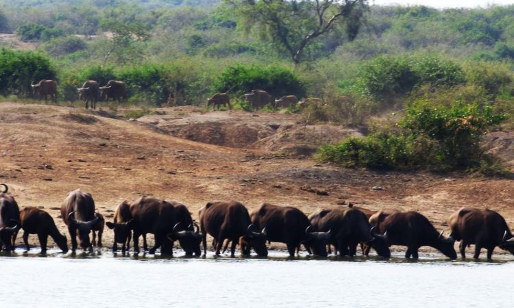 5 days Kidepo & Lake Mburo Wildlife Safari