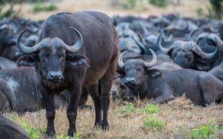 5 days Lake Mburo, Bwindi & Queen Elizabeth Park Safari