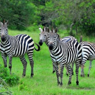 5 days Lake Mburo National Park and Jinja Safari