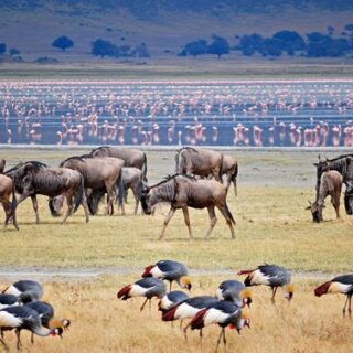 11 Days Tanzania Rwanda Safari