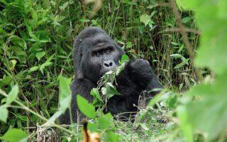 5 Days Gorilla trekking and Mount Sabinyo hike
