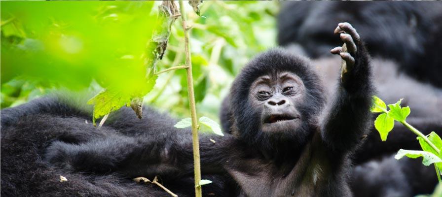 5 Days Uganda Wildlife & Gorilla Trekking Safari